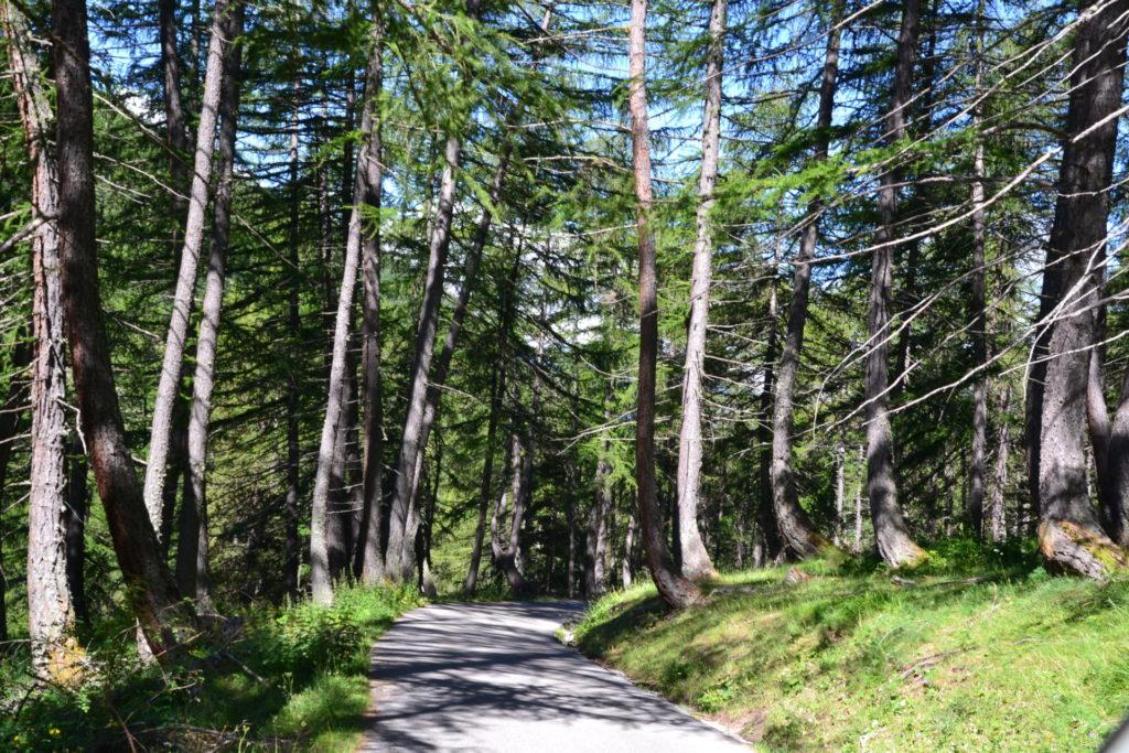 marc-aynie-mercantour-guide-alpes-allos-haute-provence-faune-flore-mercantour-sud-de-la-france-parking-du-laus-parking-de-la-cluite
