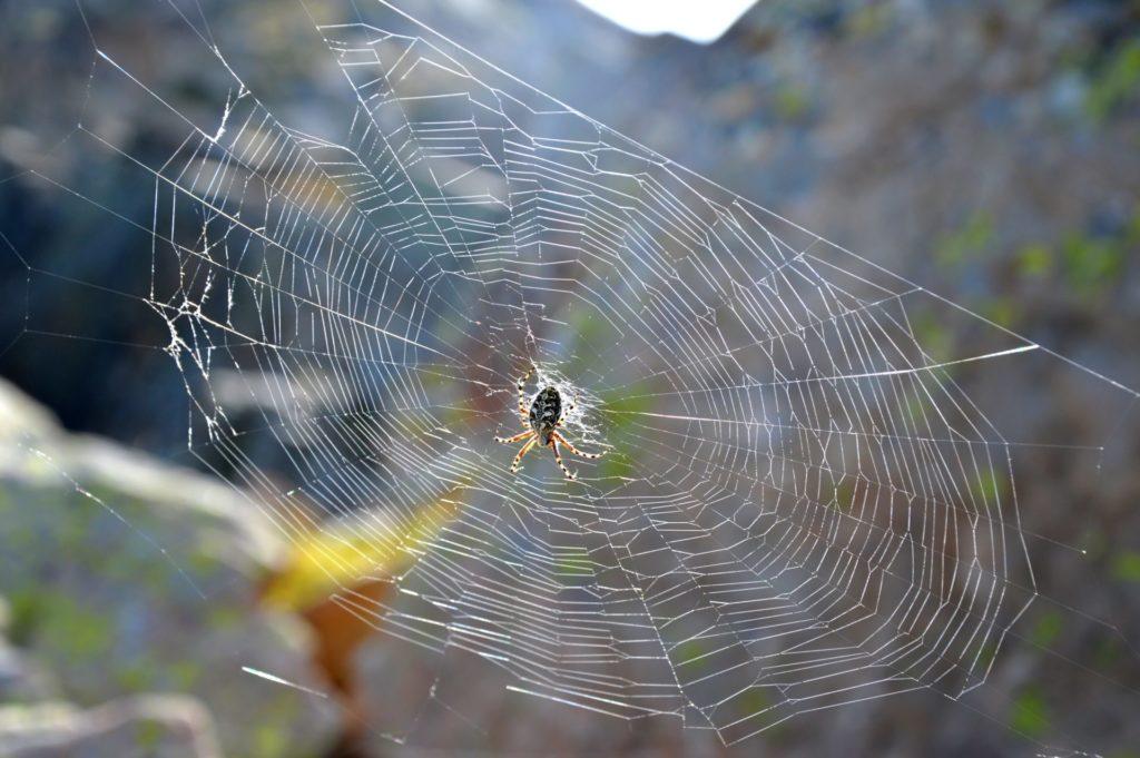 marc-aynie-mercantour-guide-alpes-allos-haute-provence-faune-flore-mercantour-sud-de-la-france-bouquetin-montagne-spider-araignee