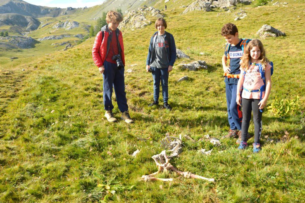 marc-aynie-mercantour-guide-alpes-allos-haute-provence-faune-flore-mercantour-sud-de-la-france-montagne-vautour