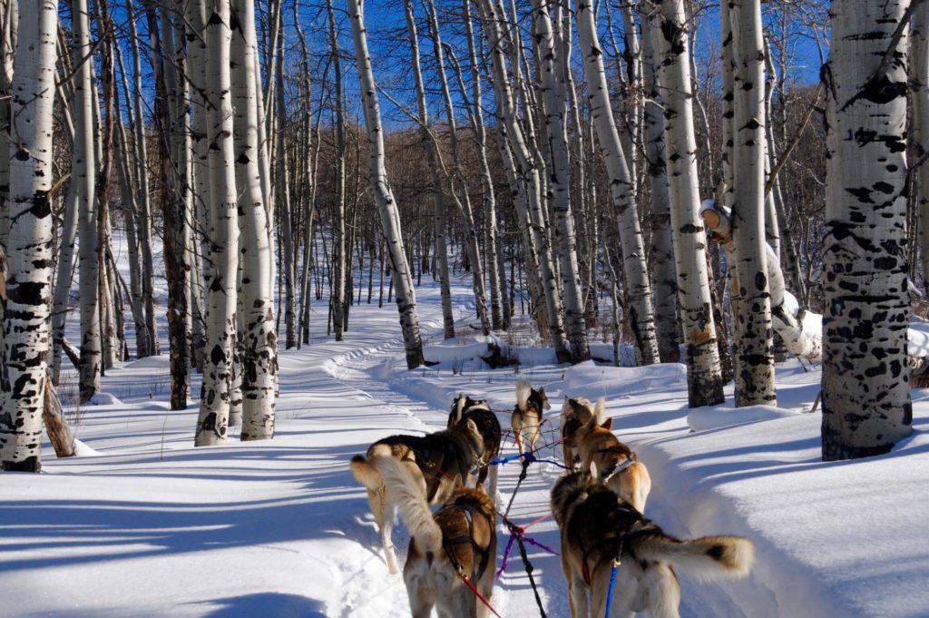 plagne-montchavin-lescoches-paradiski-sport-hiver-montagne-neige-savoie-tarentaise-ski-winter-chien-de-traineau-dog-sledding